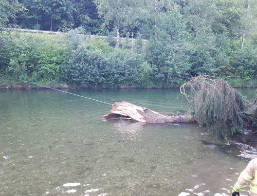 Technischer Einsatz – Großer Baum in die Erlauf gestürzt!